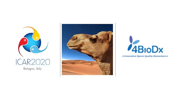 ICAR 2020 (Bologne, Italie)-image