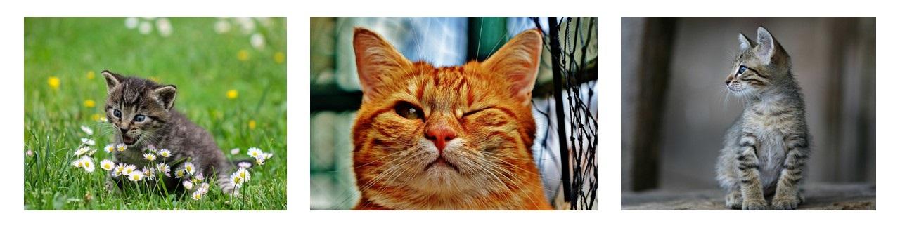 4MID Cat Header