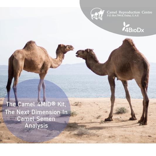 Camel 4MID Kit